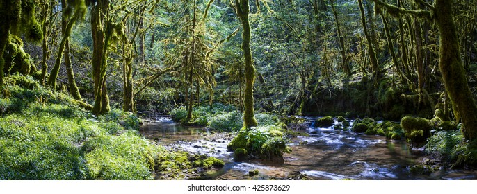 Panoramic view of a river in undergrowth