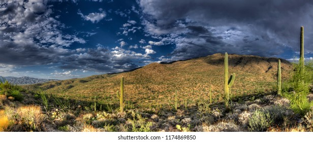 Panoramic view of Saguaro National Park