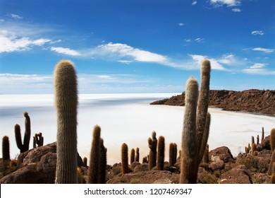 Panoramic view of the salt lake Uyuni in Bolivia from the island Incahuasi, Salar de Uyuni, Bolivia