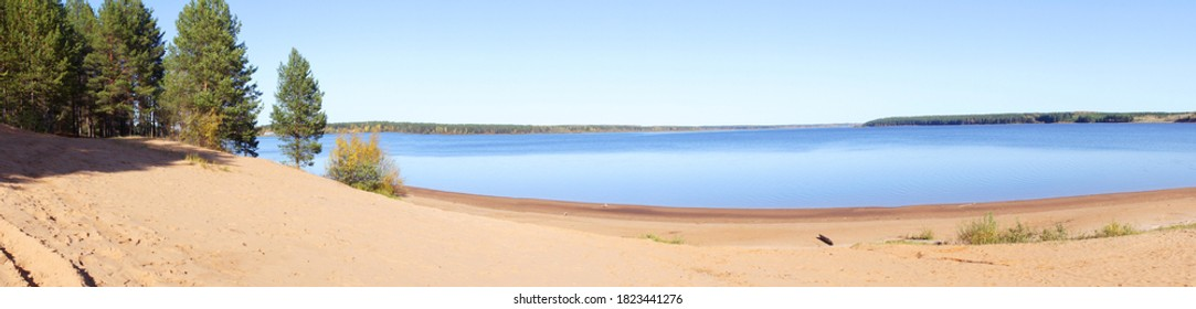 Panoramic view of a sandy beach, pine trees, pond or lake. Sand dunes on the beach. Beautiful summer landscape. widescreen. no people at the beach.