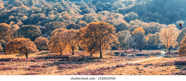 Panoramic view of scenic valley with colorful autumnal trees in Snowdonia, North Wales, UK
