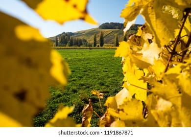 Panoramic view of Schengen vinyards in Luxembourg. Nature concept.