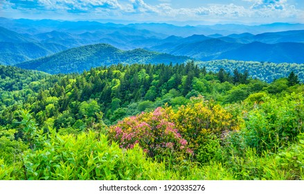 A panoramic view of the Smoky Mountains from the Blue Ridge Parkway. Beautiful flowers blooming in the mountains. Near Asheville, Blue Ridge Mountains, North Carolina, USA. - Shutterstock ID 1920335276