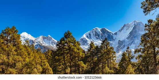 Panoramic view of Snow covered Himalaya mountains and green forest in foreground on a bright sunny day in Nepal. Manaslu circuit trek December 2017.