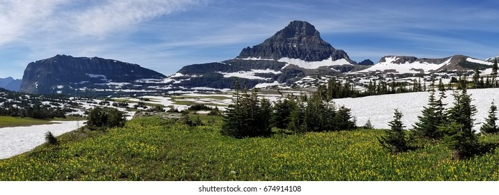 Panoramic view of snow in the mountains with wild flowers in foreground, Glacier National Park