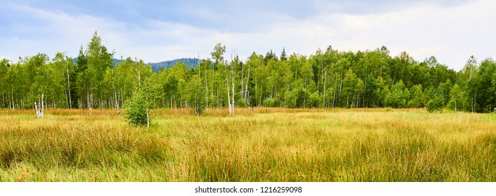 Panoramic view of Soumarske raseliniste (moor or peat bog), Sumava National Park (Bohemian forest) in Czech Republic