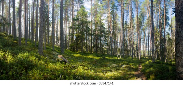 panoramic view of summer forest at Ruunaa hiking area, Finland