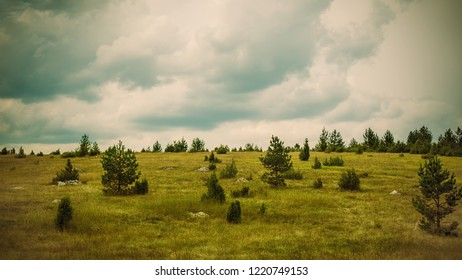 Panoramic view of summer grove meadows. Beautiful landscape in Montenegro. Zabljak, Durmitor