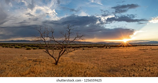 Panoramic view of the sunset in vast grassy landscape with dead tree