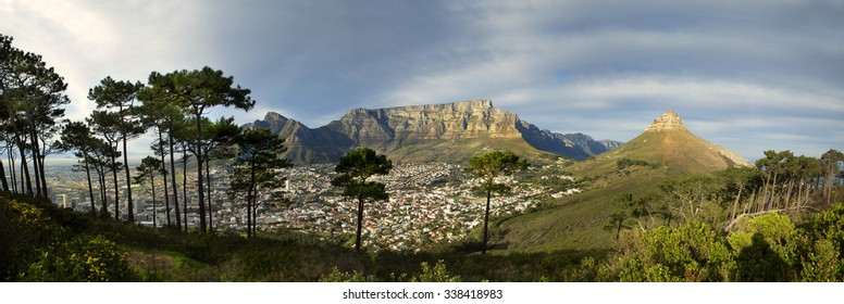 Panoramic view of Table Mountain from Signal Hill, showing stony pine trees in the front, with Lion's Head on the right and Devil's Peak on the left, with the Cape Town City Bowl in the front.