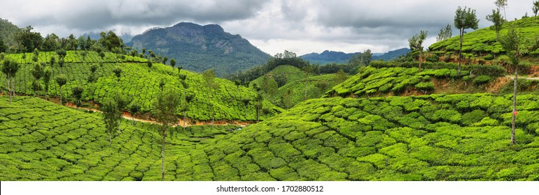 Panoramic view of Tea plantations between Yellapetty and Top station in Munnar, Kerala, South India