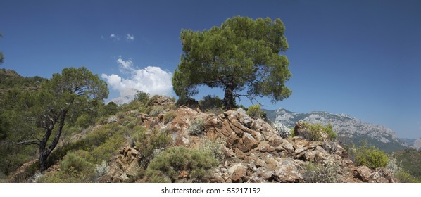 panoramic view of the tree on the rocky hill