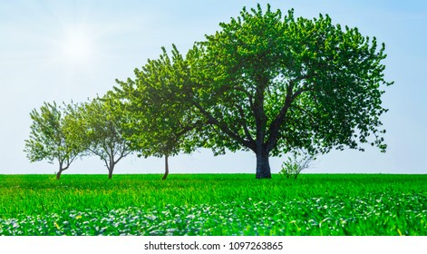 Panoramic view of trees in a field. Generation growth legacy family concept