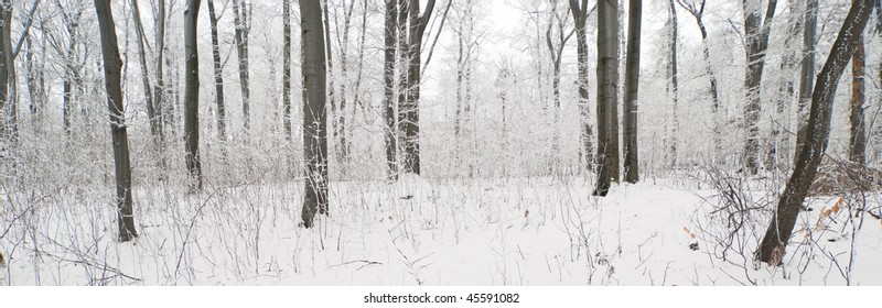 Panoramic view of trees and underwood in a winter forest