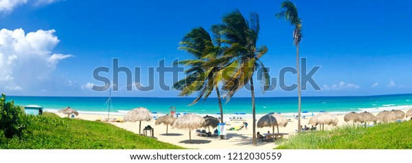 Panoramic view of tropical white sandy beach with blue sea, coconut palm tree, long chairs and umbrella. Tropical destination for relax holiday. Havana, CUBA.