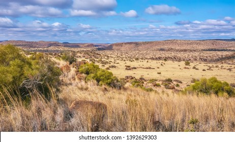 A panoramic view of a typical landscape in the Great Karoo region of South Africa, including its flat topped hills known as Karoo Koppies. Near Philippolis, Free State.