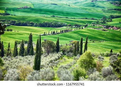 Panoramic view of typical tuscany countryside with cypress and meadow, Siena province, Italy.