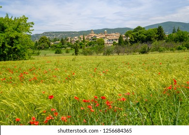 Panoramic view of the village Lourmarin in Provence, France. Wheat field with poppies in the foreground.