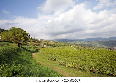 Panoramic view of a vineyard in the Venetian countryside - Valpolicella