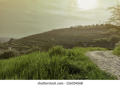 Panoramic view the vineyards in Valpolicella