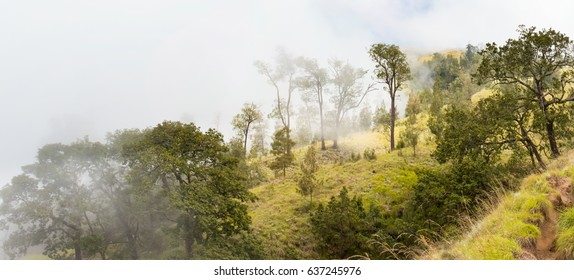 Panoramic view of the wooded hills in the fog, Indonesia