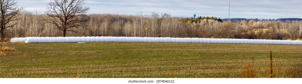 Panoramic view of wrapped round bales from an inline bale wrapper to make round bale silage for livestock feed. Selective focus, background blur and foreground blur.