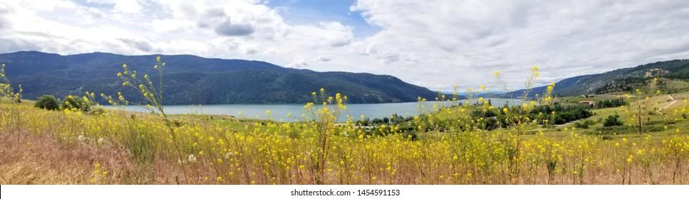 panoramic view of yellow flowers, lake, mountains in British Columbia