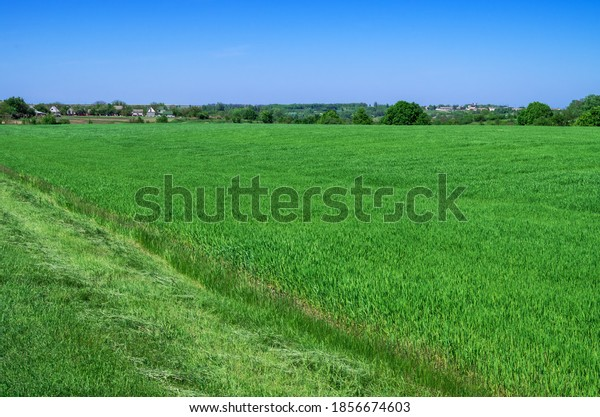 panoramic-view-young-wheat-crops-600w-18