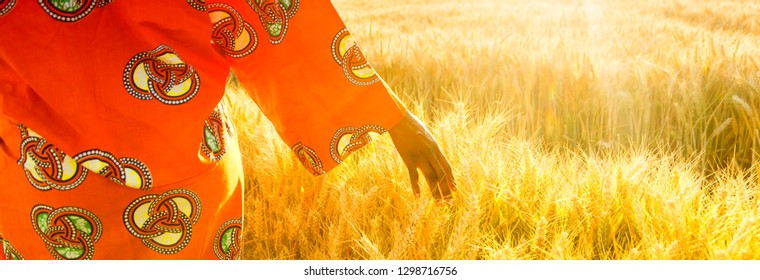 Panoramic web banner of African woman in traditional clothes walking with her hand touching field of barley or wheat crops at sunset or sunrise