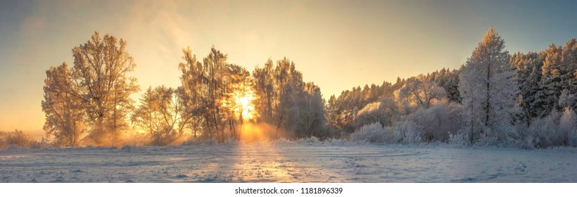Panoramic winter landscape. Frosty nature in warm golden sunlight. Vivid sunbeams glows on trees covered hoarfrost. Beautiful winter morning. Amazing winter. Christmas and New Year background.
