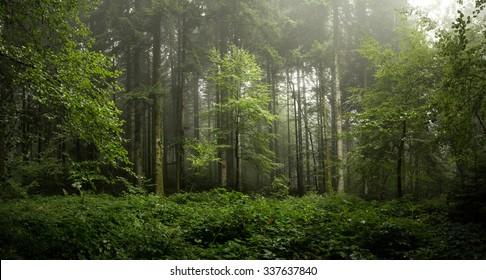 panoramique dans les bois avec un arbre au centre