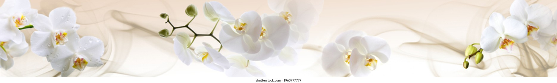 Panoramma for kitchen with orchids