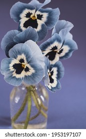 Pansies flowers in glass vase on blue background.Rustic stil life photography.