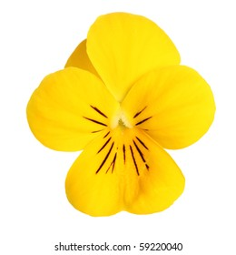 pansy flower isolated on white background