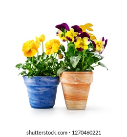 Pansy flowers and easter bunny in flowerpot isolated on white background clipping path included. Spring garden  yellow viola tricolor plant as holiday present
