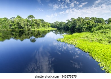 Pantanal - The Brazilian wetlands