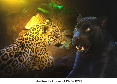 Panther and Leopard with morning sunset Sit on the floor
