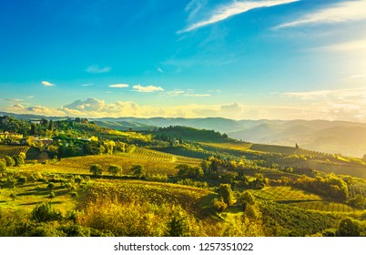 Panzano in Chianti vineyard and panorama at sunset in autumn. Tuscany, Italy Europe.