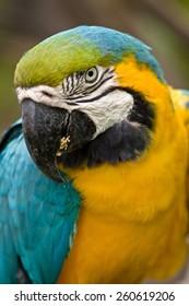 Papagayo, parrot colorful tropical ecuadrorian bird