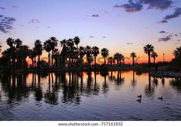 Papago Park Palm Tree Sunset Arizona Stock Photo Edit Now