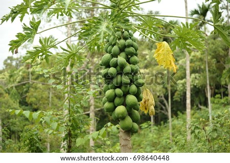 Papaya Garden Images