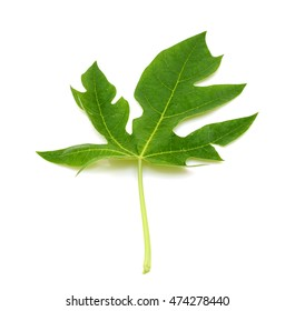 papaya leaf isolated on white background