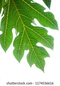 Papaya leaf . the widely cultivated papaya (also called papaw or pawpaw), a tropical fruit plant. For the mountain papaya (Vasconcellea pubescens) of South America, see Mountain papaya.