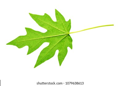 Papaya leaves on white background. This has clipping path.