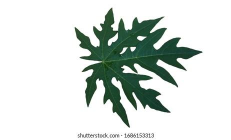 Unique Leaf Structure Images Stock Photos Vectors Shutterstock