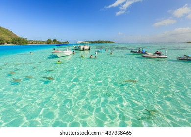 PAPEETE, FRENCH POLYNESIA - JUNE 14, 2016 : The Tourists swimming and feeding sharks and Stingrays in beautiful sea at Moorae Island, Tahiti PAPEETE, FRENCH POLYNESIA on June 14, 2016