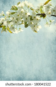 Paper background with sweet cherry blossom.
