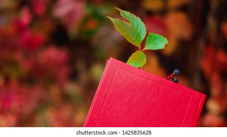 Paper book in red cover with bookmark made of wild grapes leaf with berry on background of colorful autumn ivy foliage. Beautiful nature background of Fall season.