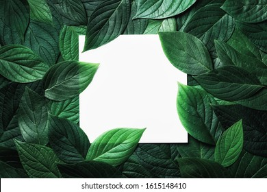 Paper card in green leaves pattern. Beautiful nature background.