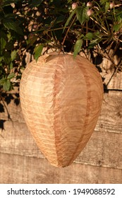 Paper Fake Wasp Nest For Garden